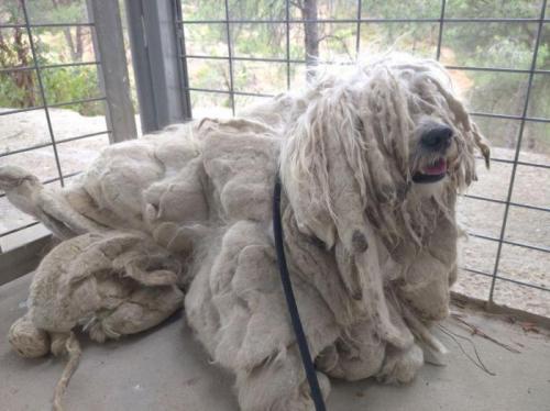 ELVIS - perro en adopción