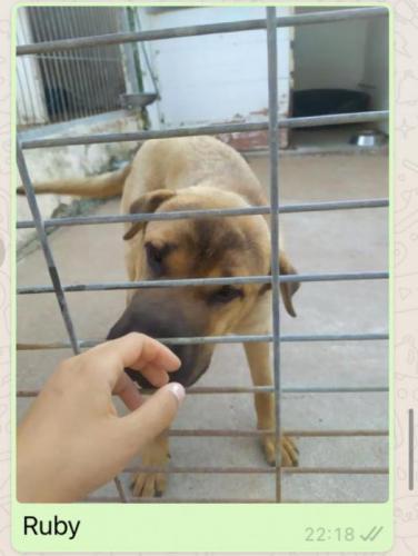 RUBY - perro en adopción