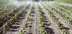 Venta de Finca de regadío para algodón y arroz en Sevilla