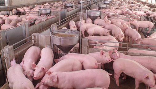 Venta de Granja de cerdos en Zaragoza