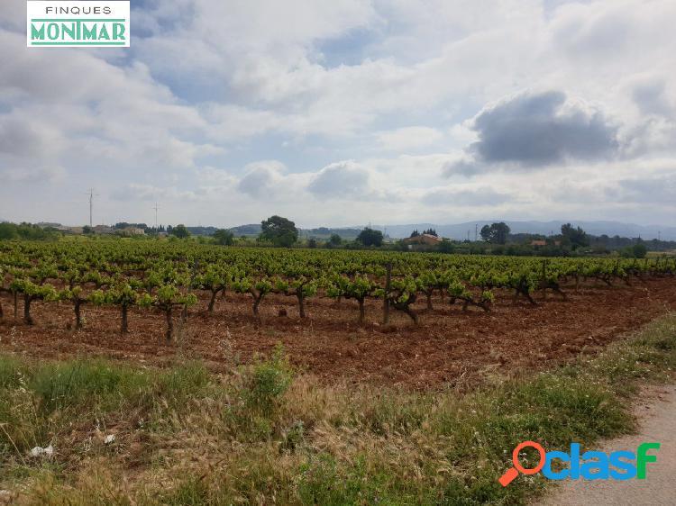 Venta finca Rústica de 32.311 m2 de viñedo en Castellet i la Gornal.