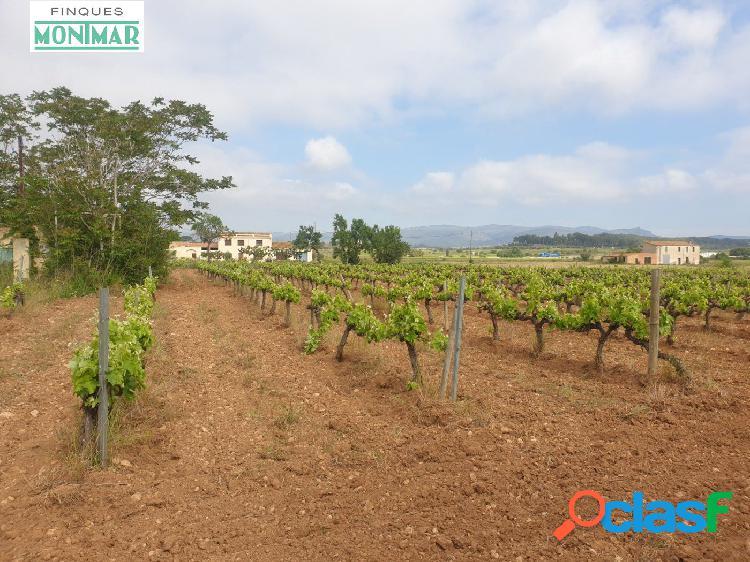 Venta finca Rústica de 32.311 m2 de viñedo en Castellet i la Gornal. 1