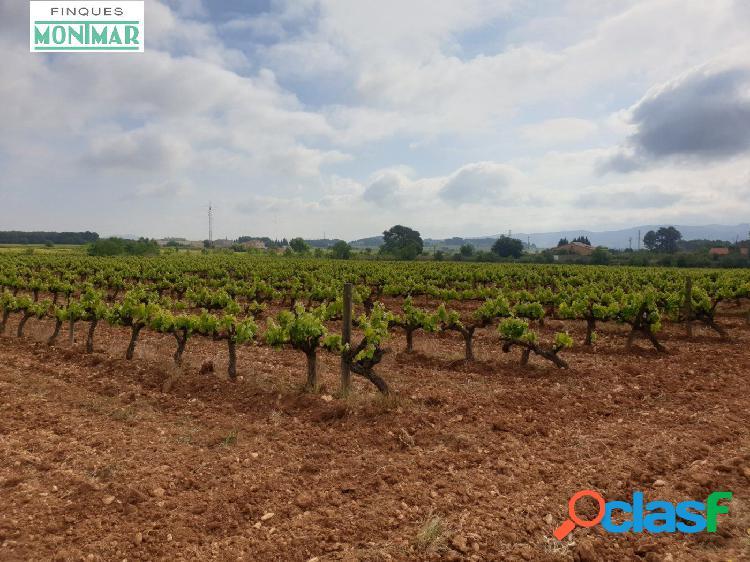 Venta finca Rústica de 32.311 m2 de viñedo en Castellet i la Gornal. 3