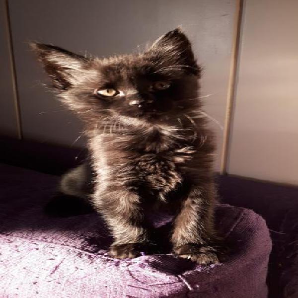 Betty - gato en adopción