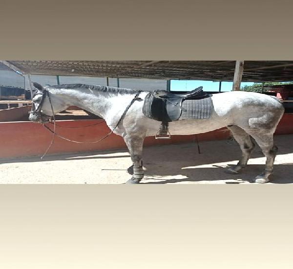 Venta de 1 Caballo en Sevilla