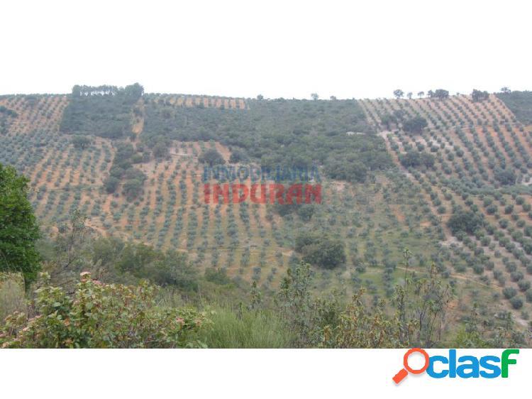 Finca agrícola y cinegética de 8 ha con unos 600 olivos en producción y aproximadamente 200 alcornoques situada en el término municipal de castañar de ibor (cáceres)
