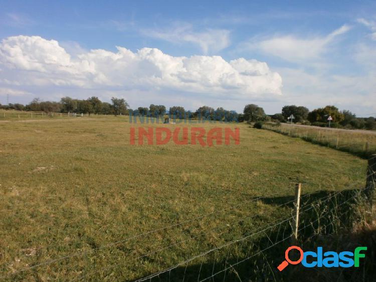 Finca ganadera de 136 ha, poblada de encinas, con un cebadero de terneros y 2 viviendas situada en el término municipal de casatejada (cáceres)