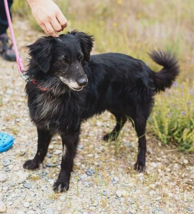 Booger - perro en adopción