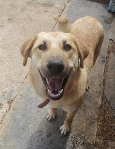 Canela - perro en adopción