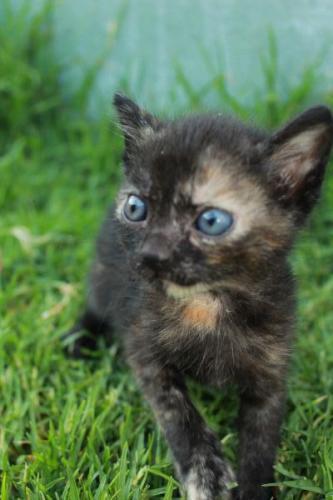 Alba - gato en adopción