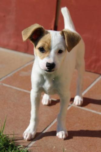 Mini - perro en adopción