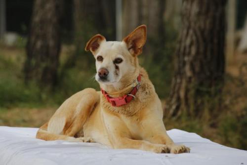 Nuka - perro en adopción