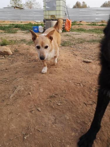 Pancho - perro en adopción