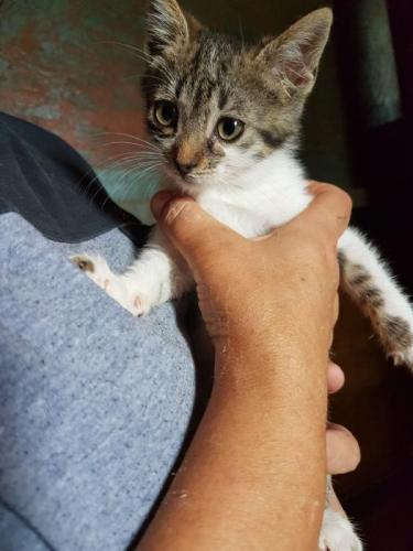 Pinky - gato en adopción