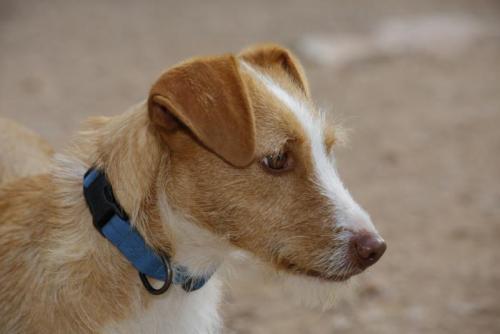 Ruca - perro en adopción