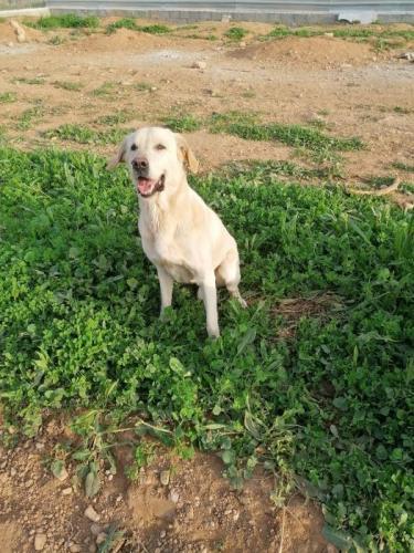 Sugus - perro en adopción
