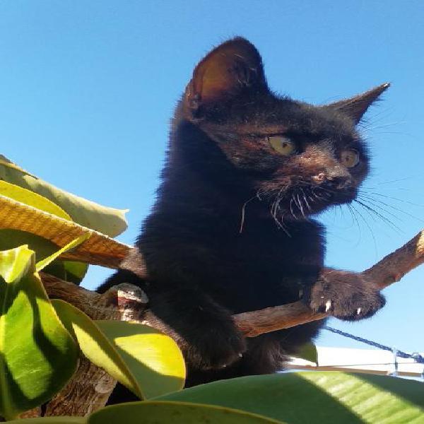 Verde - gato en adopción