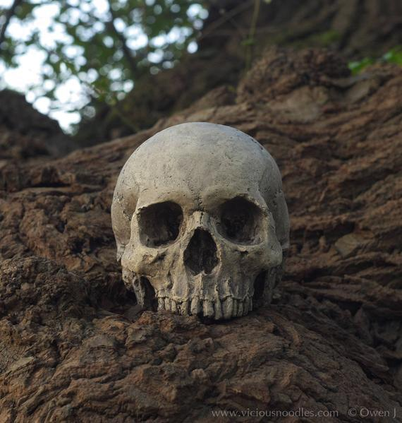 Human skull replica (natural) full size realistic replica
