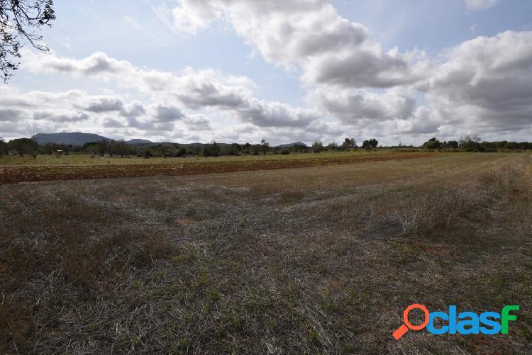 Solar rústico a pocos metros del pueblo de Algaida 2