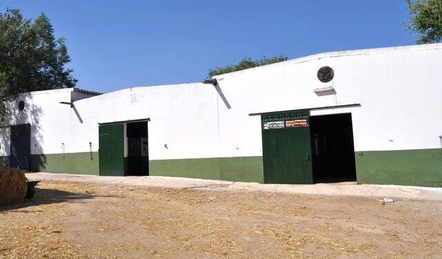 Pupilaje y doma de caballos en madrid