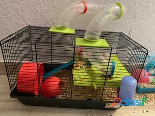 Regalo hamster con jaula
