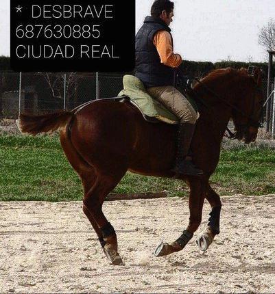 Doma y desbrave de caballos en ciudad real