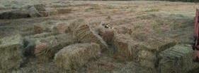 Venta de hierba en ourense