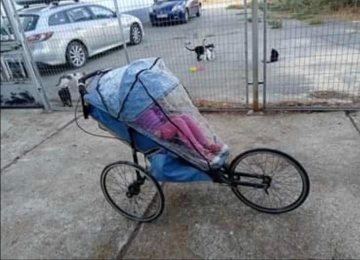 Running buggy