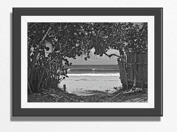 Black white photo | path to a surf beach in hawaii |