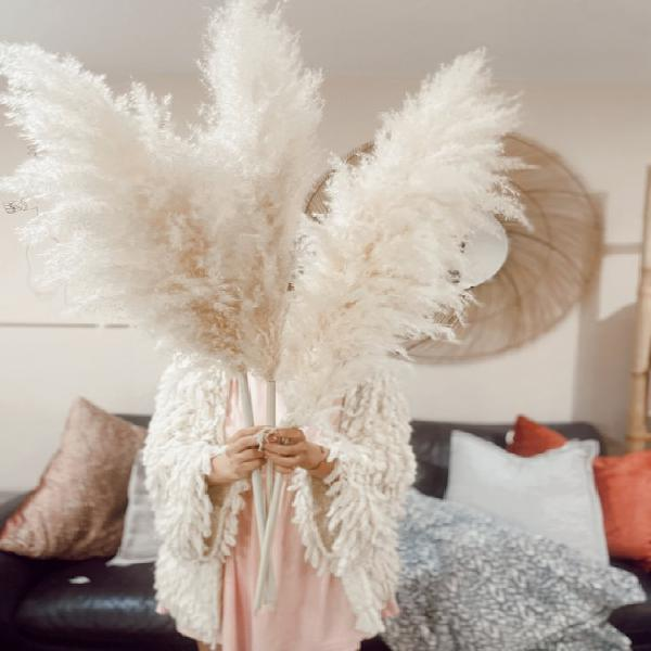 Large ivory 4 feet tall high quality dried pampas grass