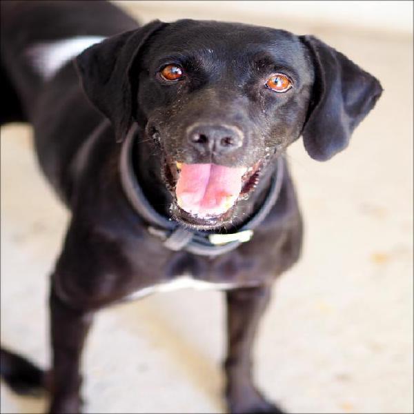 Negra - perro en adopción