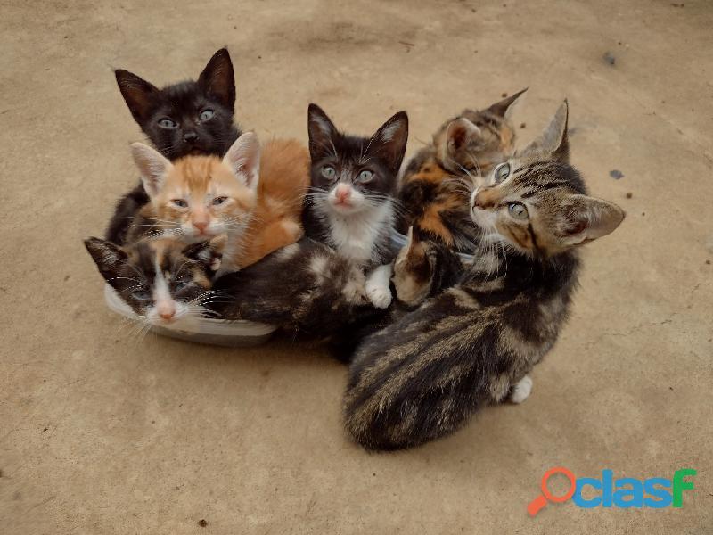 Gatitos en adopcion elgatitodeoro.com