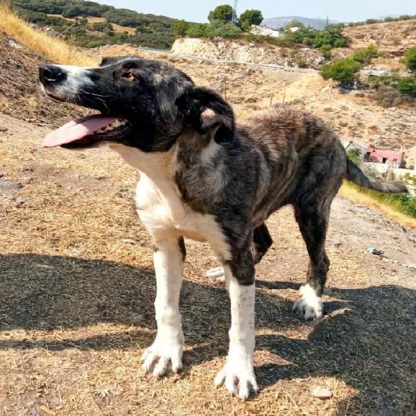 TELMA - perro en adopción