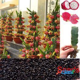 50 unids pitaya semillas fruta del dragón hylocereus undatus semillas dentro blanco exterior bonsai rojo semillas de pawpaw para la plantación de jardín en casa