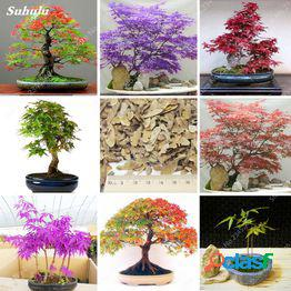 100% true usa raras rainbow maple plant bonsai tree seeds pot suit for diy home garden japanese beautiful multicolor maple 80pcs por bolsa