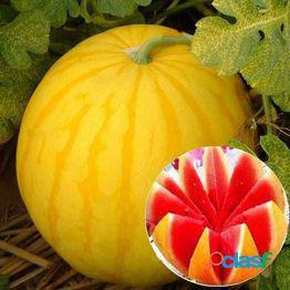 Semillas de sandía piel amarilla regalos de corazón rojo semillas de sandía semillas de plantas de jardín en casa, semillas de sandía de piel fina súper dulce, semillas de frutas orgánicas