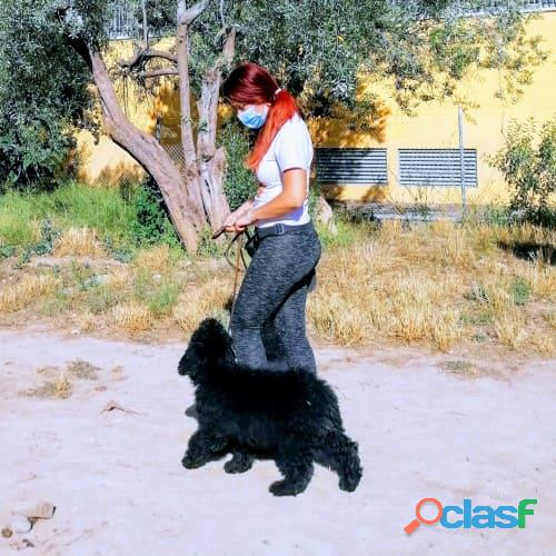 Adiestramiento de obediencia en positivo para perros